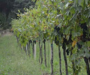 wine tour Umbria
