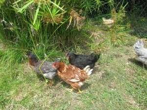 animals farm